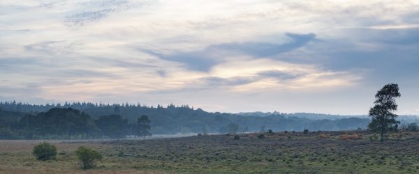 A hazy sunset in the New Forest